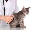 Ветеринарные клиники в Орске
